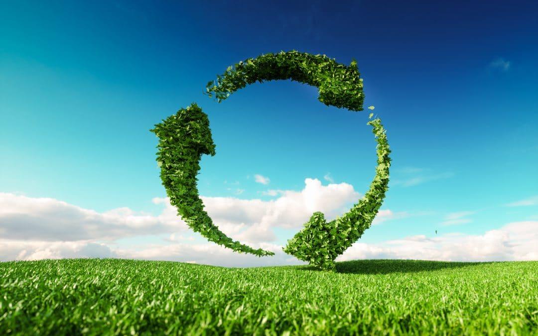 Nachhaltig: Das Ölbindemittel Zauberwatte.